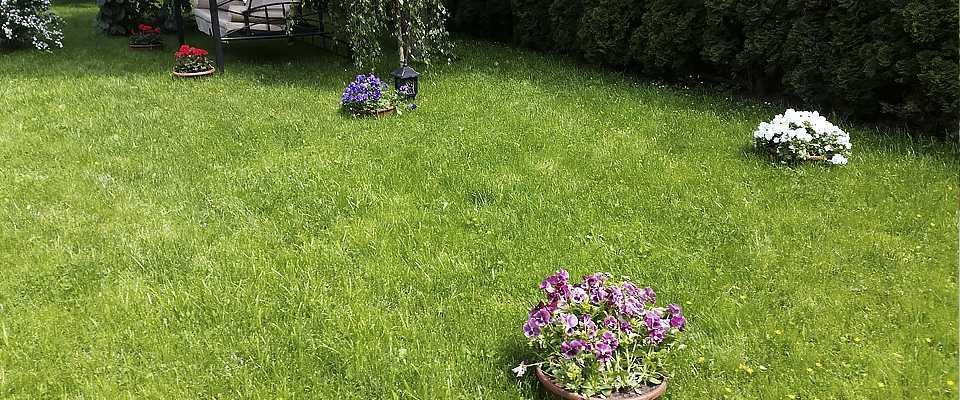 Цветущие газоны своими руками 76