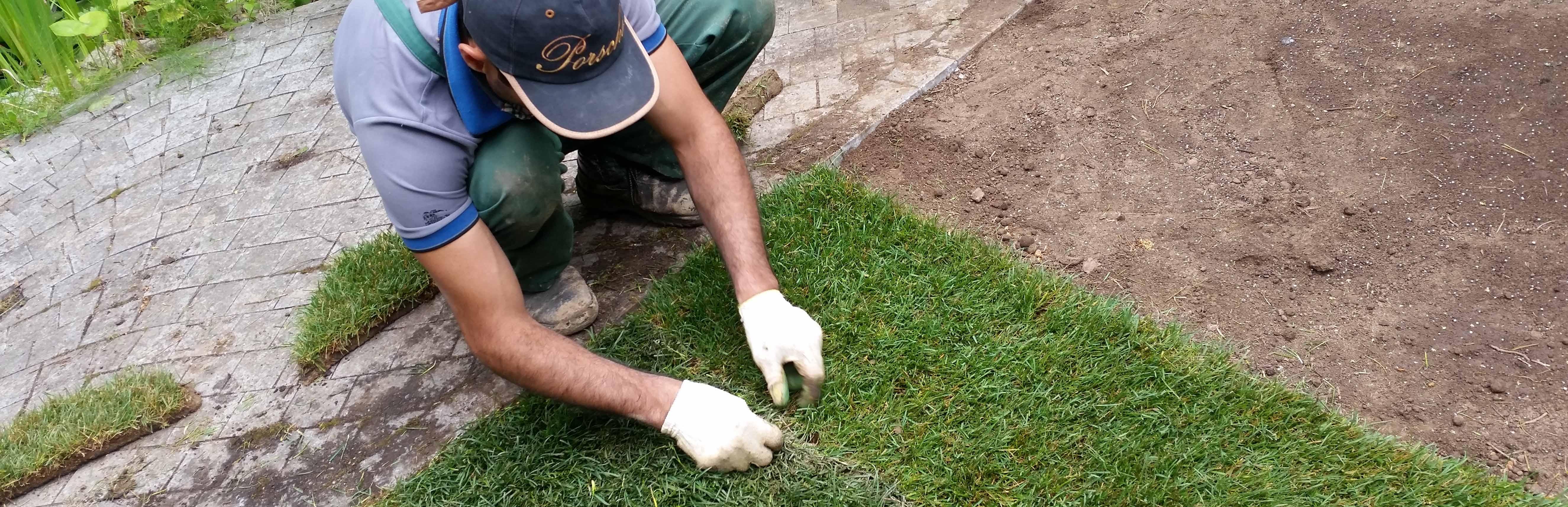 Когда сажать газонную траву в зиму 847