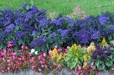 Как устроить газон на садовом участке