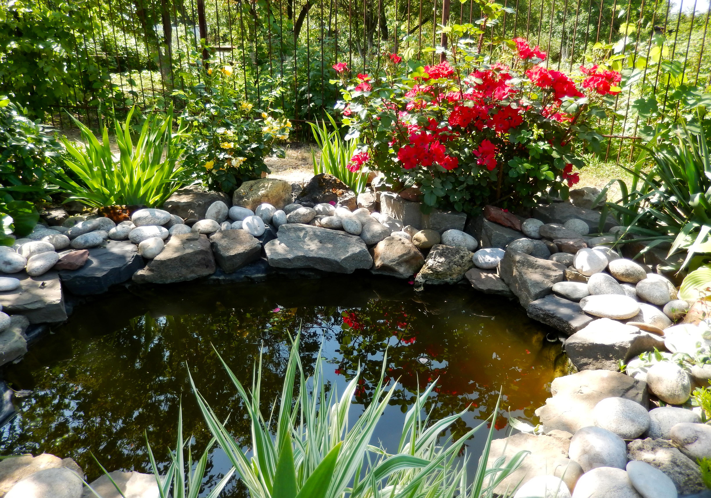 «Живой» пруд в саду – особенности проектирования водоема