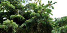 Живая изгородь: где обустроить, как выбрать и посадить растения