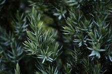 Как правильно посадить деревья на участке
